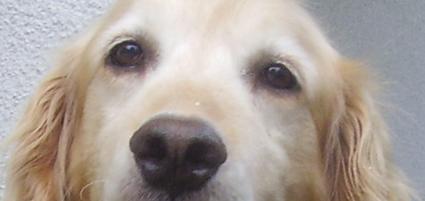 悲しい目のローラ