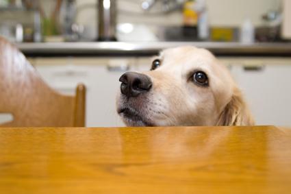 テーブルの下からローラ