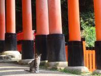 鳥居の中の猫