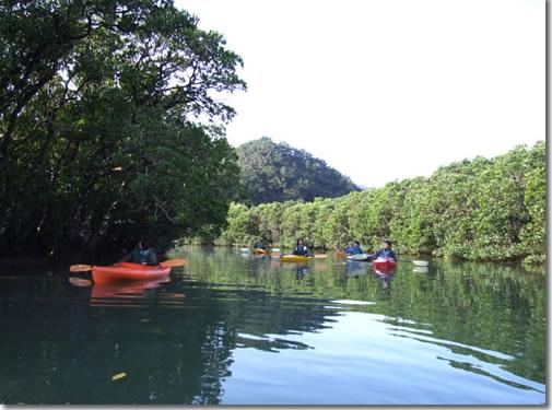 mangrobu.jpg