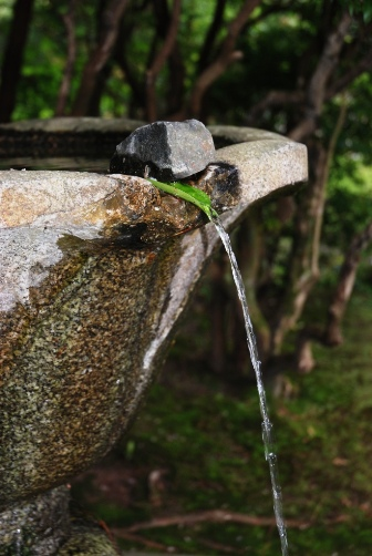 木の葉の水径