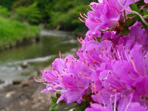 river with flowers