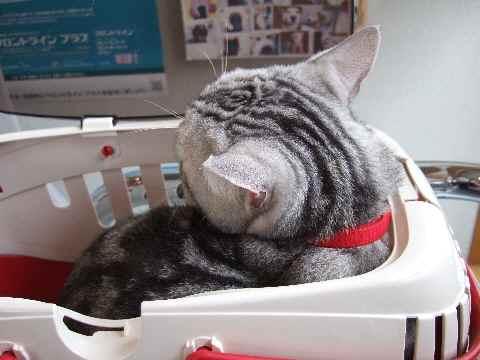 ふてくされ猫3