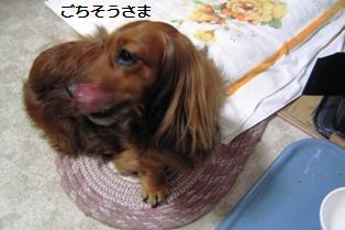 080328syokugomomo1.jpg