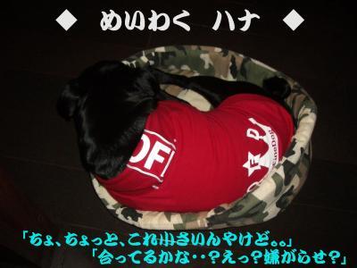 20080325_ガジ男D