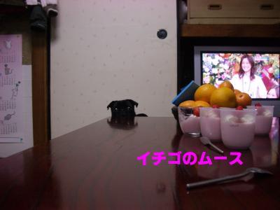 20080401_オッサン実家2