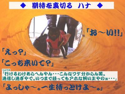 20080403_イメージカラー7