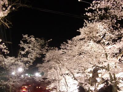 20080405_夜桜1