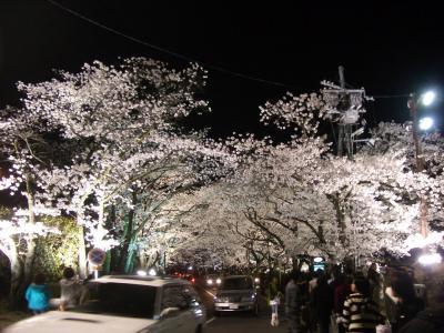20080405_夜桜2