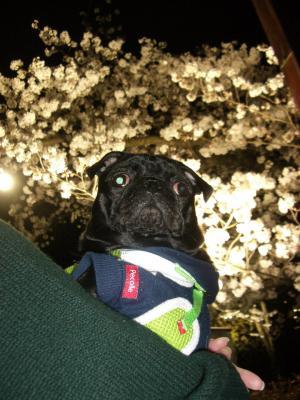 20080405_夜桜4