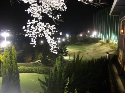 20080405_夜桜5