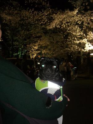 20080405_夜桜6