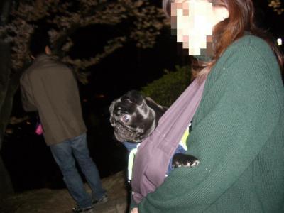 20080405_夜桜7