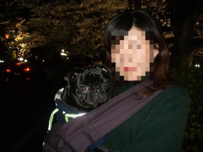 20080405_夜桜8