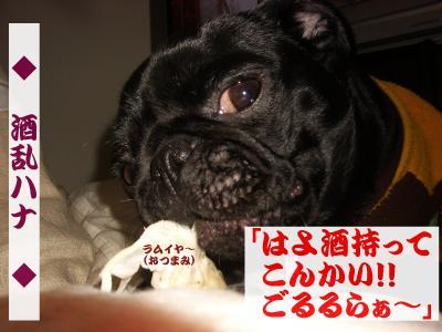 20080405_夜桜B