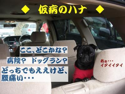 20080409_遠足E