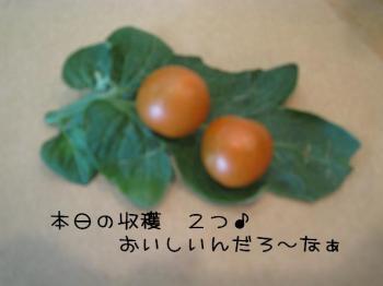 hitoshi 029