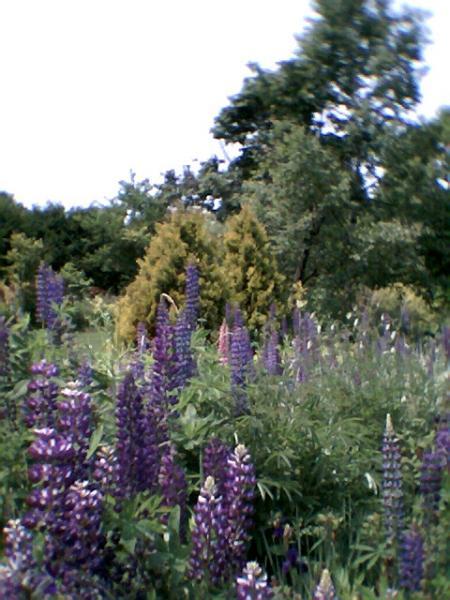 紫竹ファーム