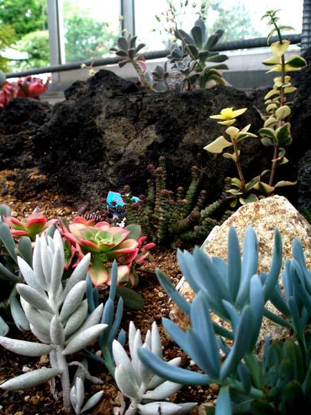 温室の多肉植物