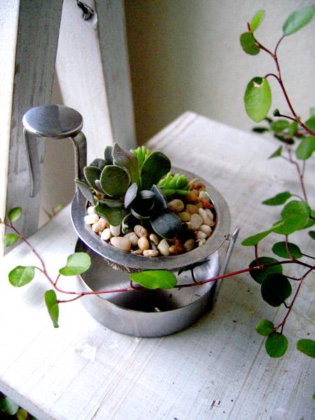 多肉のミニ寄せ植えを飾る