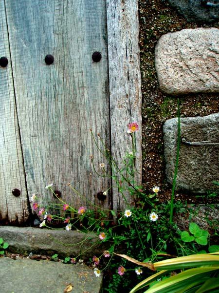 ドアの雑草