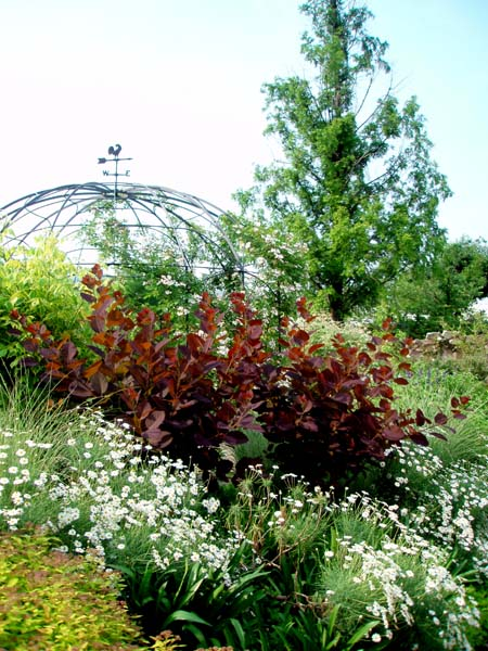 赤い木の庭