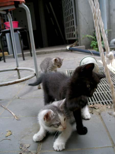 仔猫3人組