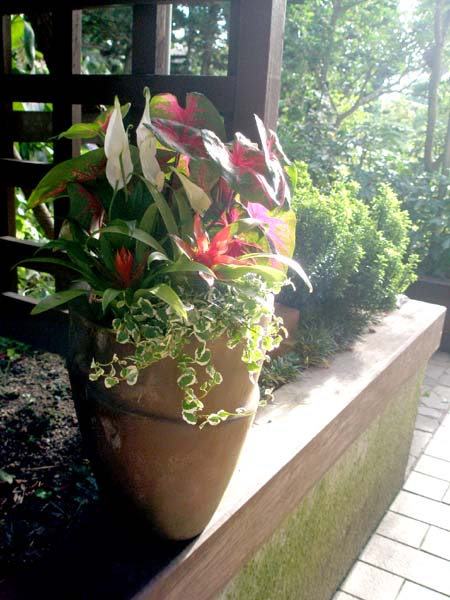 夏の寄せ植え