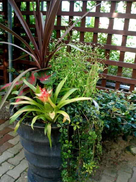 夏の寄せ植え2