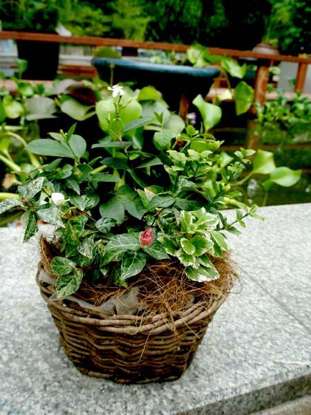 夏のミニ寄せ植え2