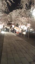 2008.3.28 三島大社 桜