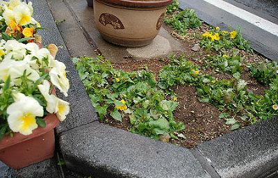 踏み荒らされた花壇