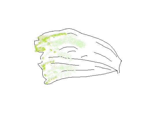 白菜その後