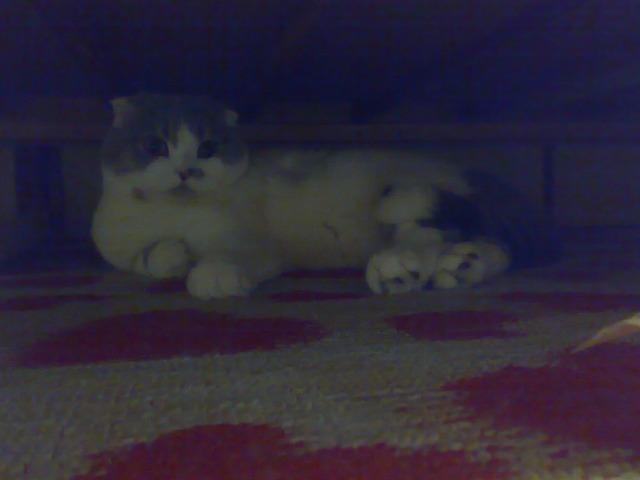 ベッド下2