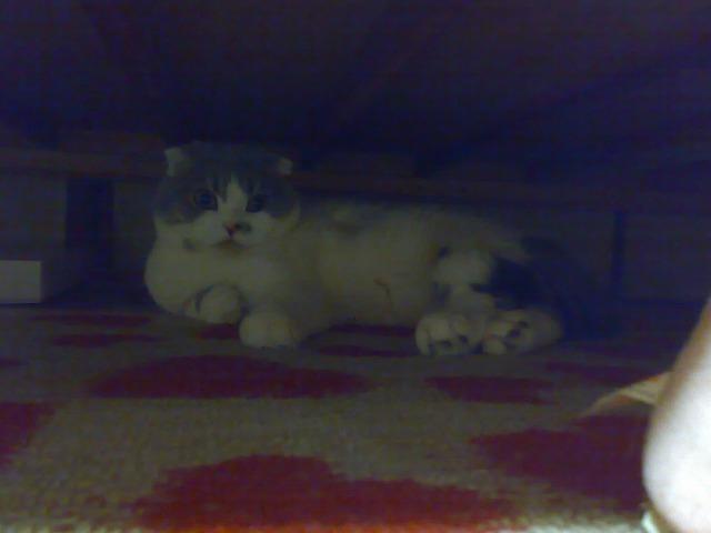 ベッド下3