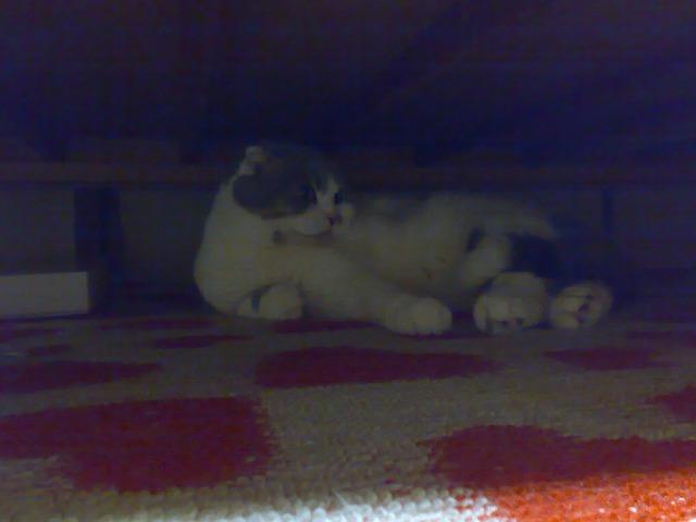 ベッド下4