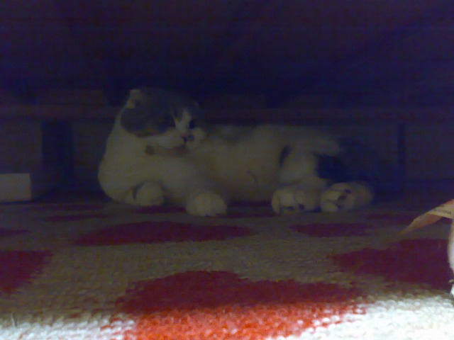 ベッド下6