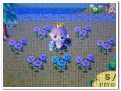 青バラ咲いた!