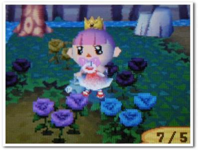 23本目の青バラ