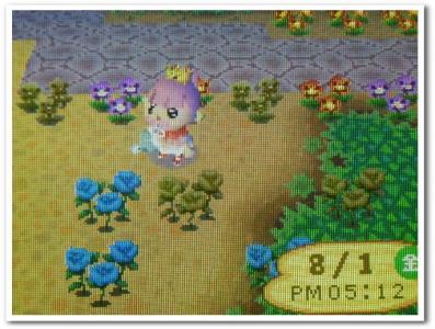 29本目の青バラ