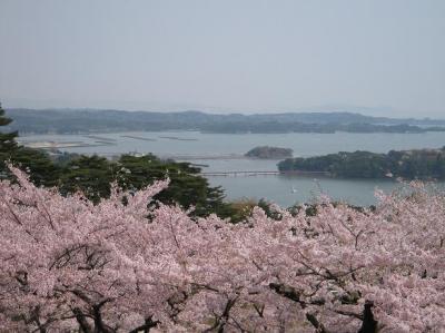 桜と松島(クリックで拡大)