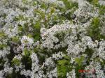 オマケ(^_^)v 途中で見つけた花