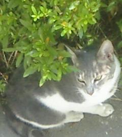 庭にたたずむ猫