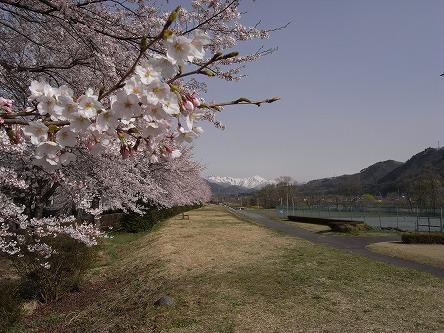桜と雪の谷川岳。