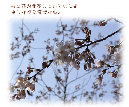 200832310.jpg