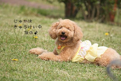 PIC017.jpg