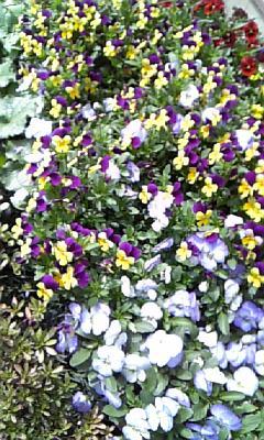 庭の花たち♪