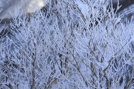 080205丹沢霧氷