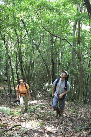 080226屋久島西部樹林