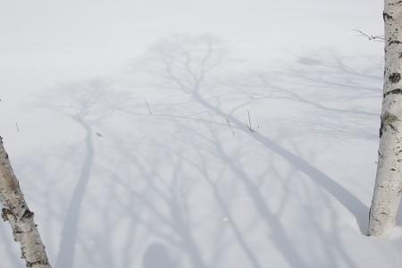 080302霧ヶ峰シラカバ